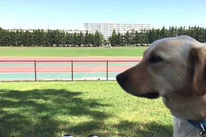 愛犬とウォーキング散歩